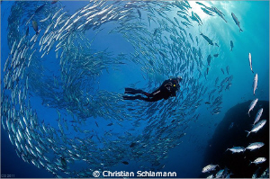 A swarm around a diver near the liberty-wreck in tulamben/bali. 